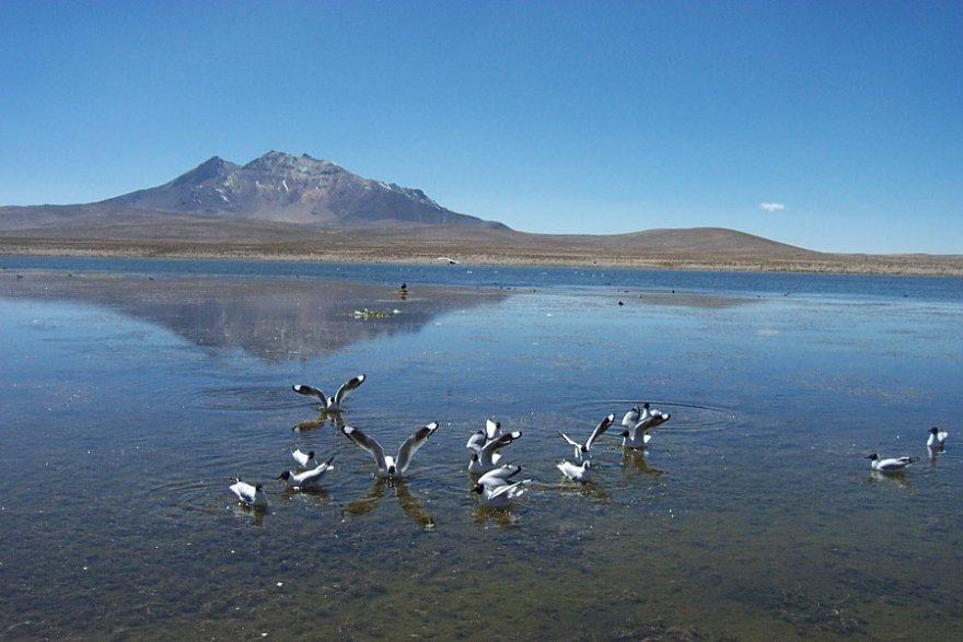 Lago Chungará nationalpark lauca chile anden altiplano