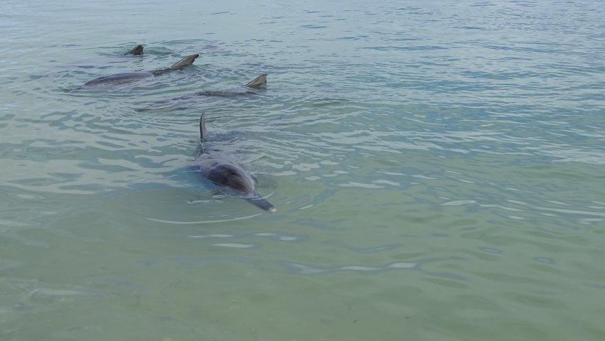 Morgendliche Delfinfütterung