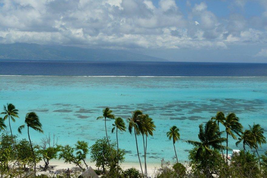 Moorea Lagune Strand Palmen
