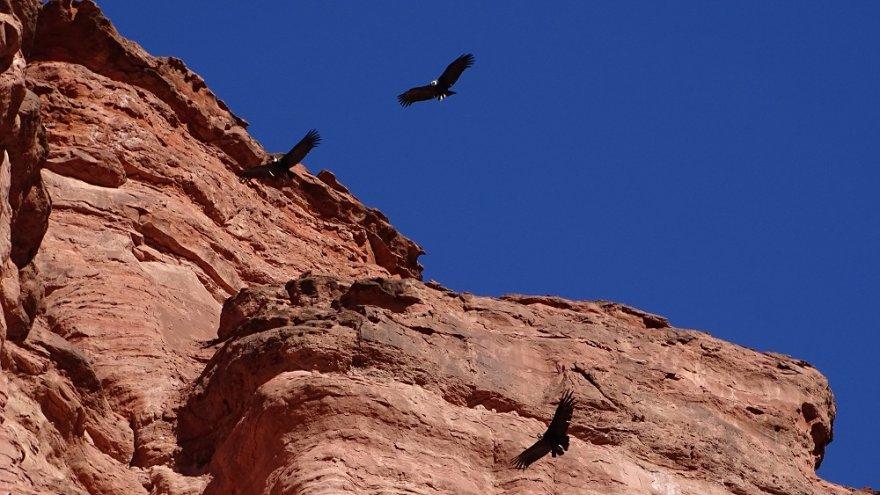 Nationalpark Talampaya Anden Argentinien Kondore