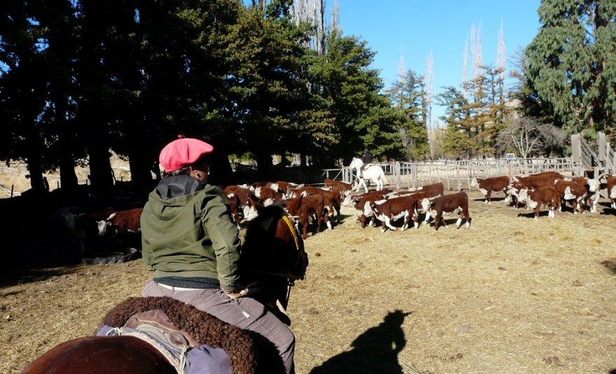 Estancia Pampa Patagonien Argentinien