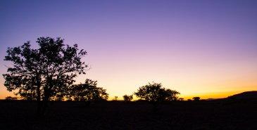 Sonnenuntergang Palmwag