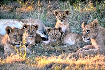 Wildhüter auf Zeit in Südafrika