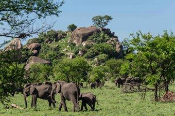 Höhepunkte Tansanias und Kenias