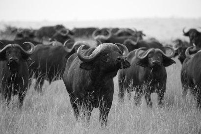 Aktuelle Reiseangebote Botswana